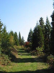 Arboretum- WeltWald -Bad grund