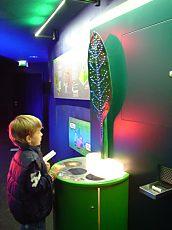 Photosynthese für Kinder erklärt