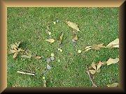 Basteln und Spielen im Herbst