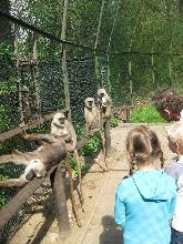 Serengetipark Hodenhagen