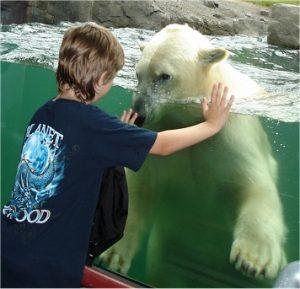 Begegnung mit Eisbären